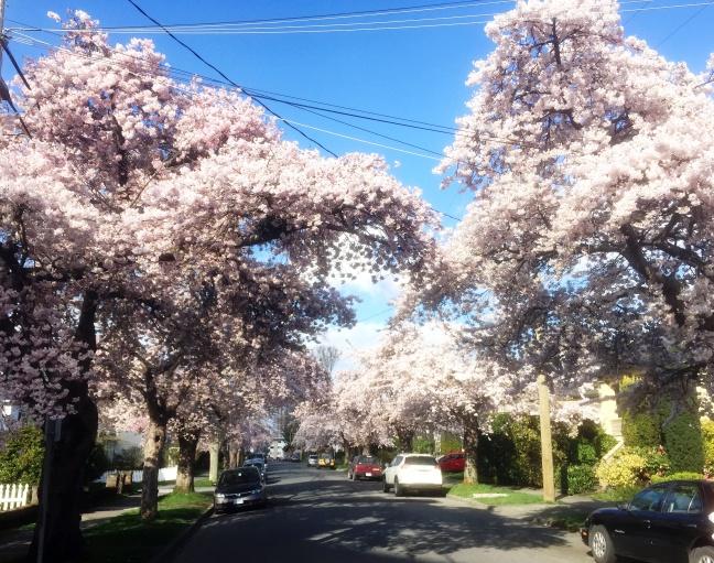 Spring2017street